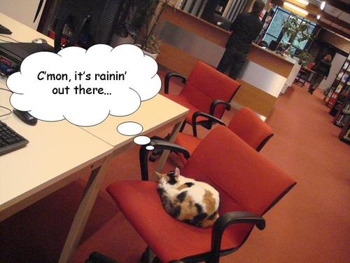 Catinlibrary